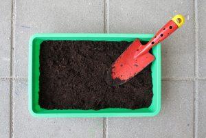 empoter plantes