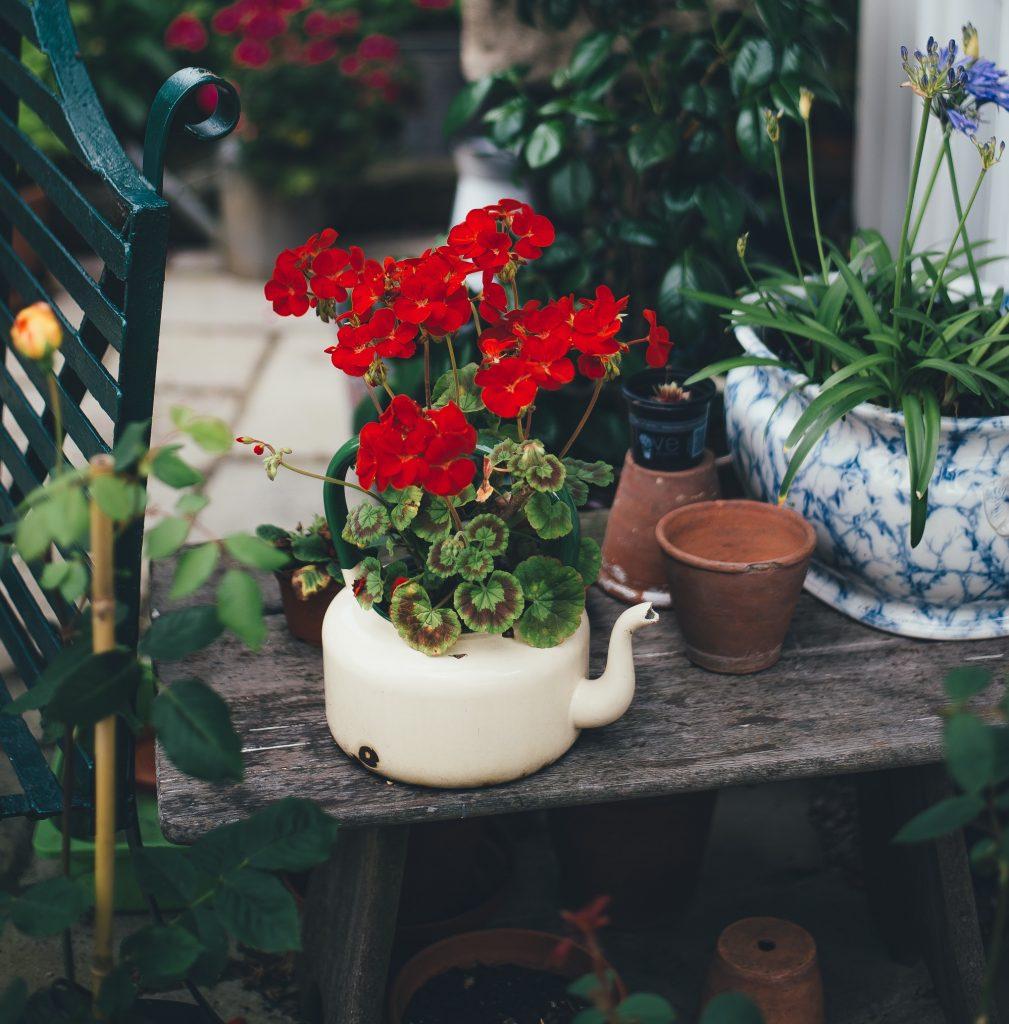 Pots de fleurs en vaisselle
